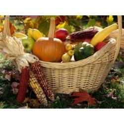 Autumn Harvest Incense