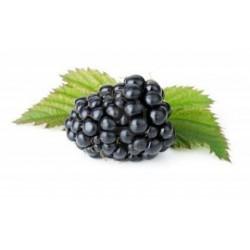 Blackberry Incense