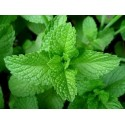 Peppermint Incense