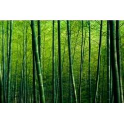 Bamboo Incense